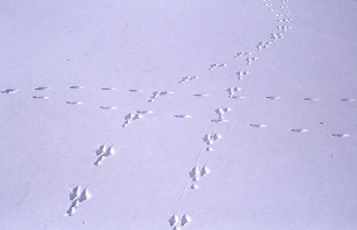 dicembre 2006 – Carlo Borioni – Tracce