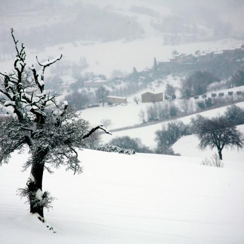 Marzo 2012 –  Celestino Pimpini – Nevicata a Colleaprico