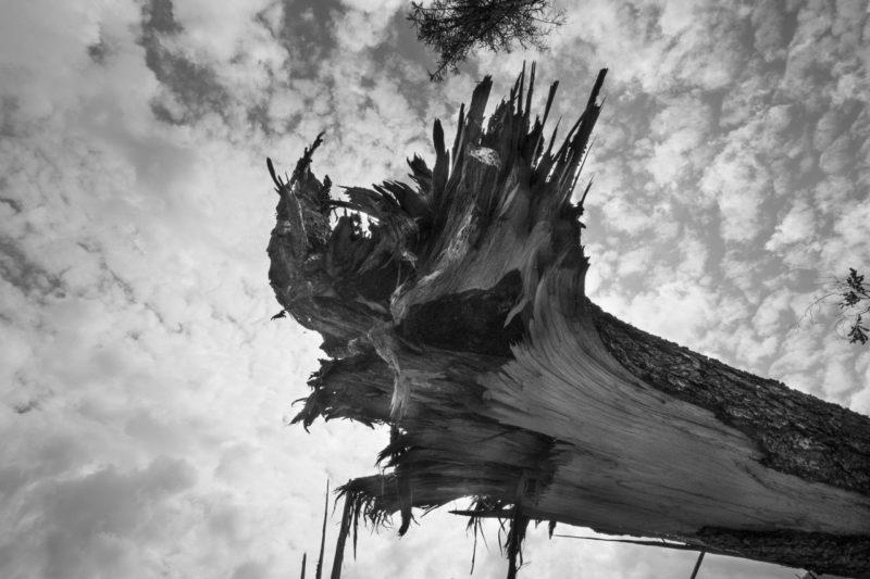 GENNAIO 2020 – VAIA – Il dolore del bosco