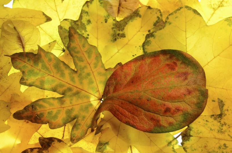 Settembre 2016 – Colori nel bosco